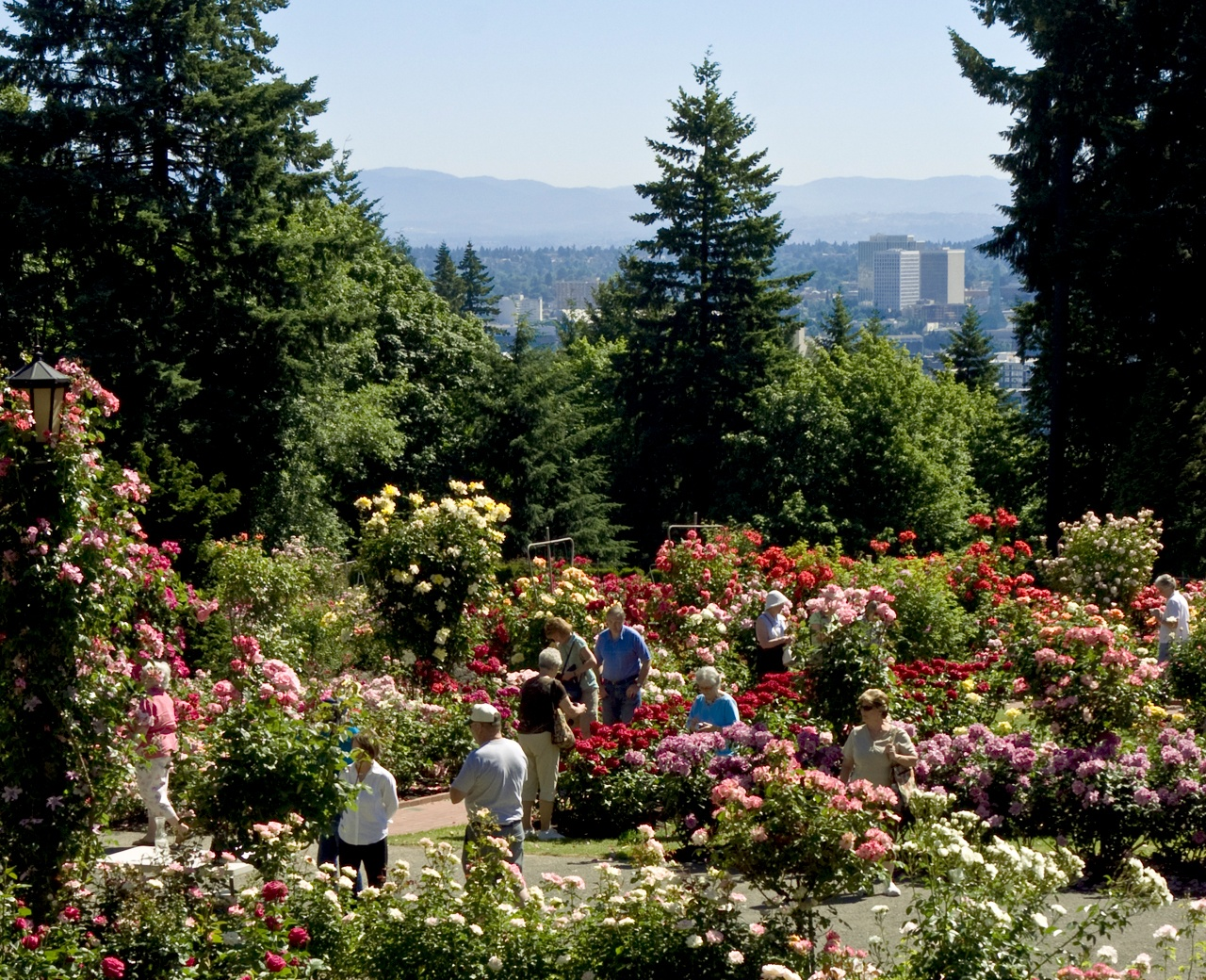 people visiting a blooming Rose Garden in Washington Park