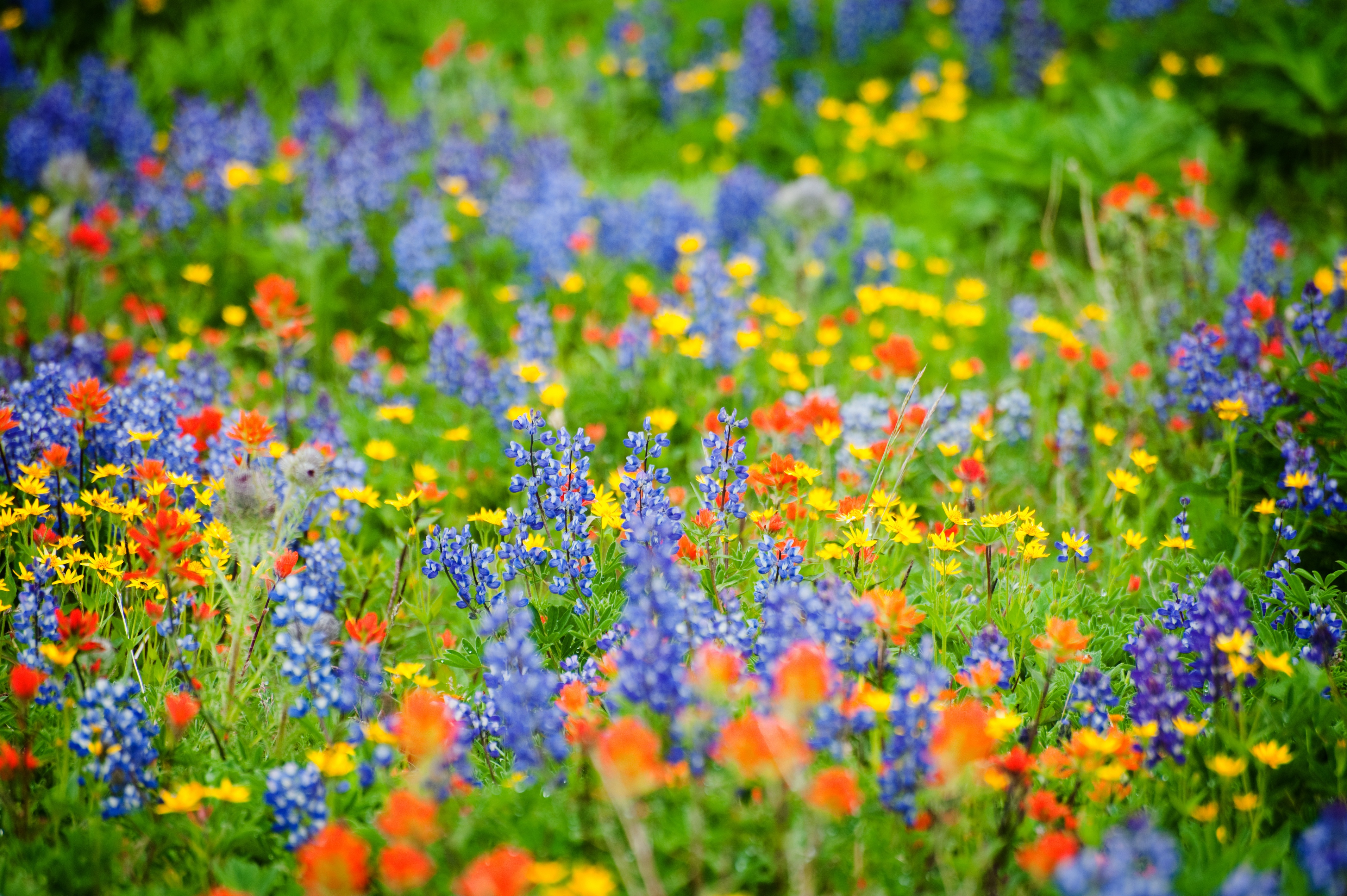Wildflower Viewing In Greater Portland The Official Guide To