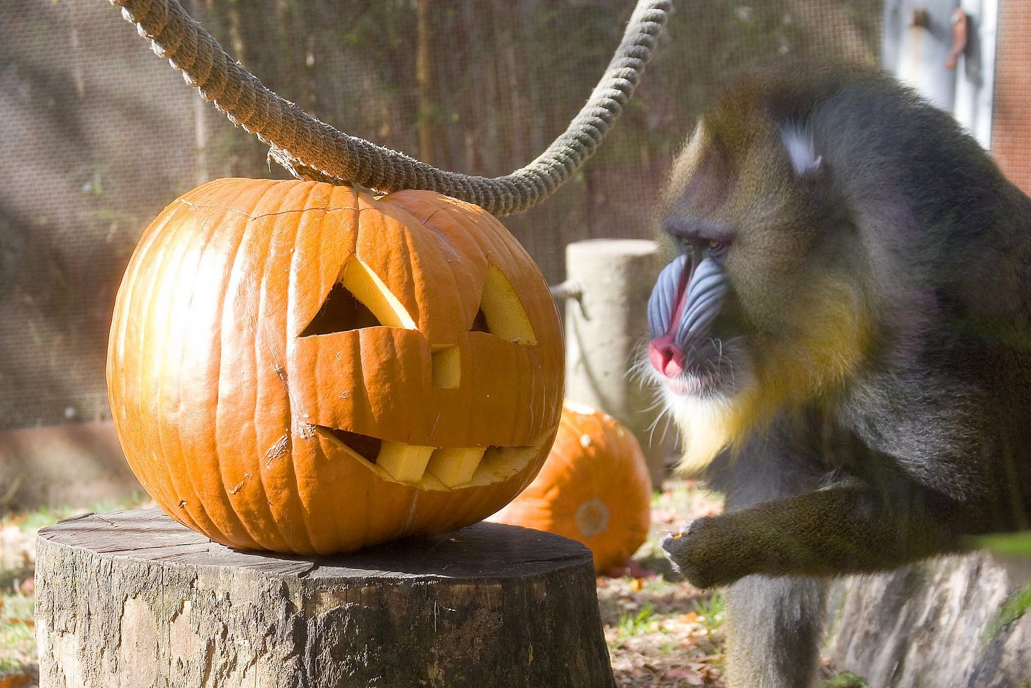 Portland Halloween Events 2020 Halloween Events in and Around Portland | The Official Guide to
