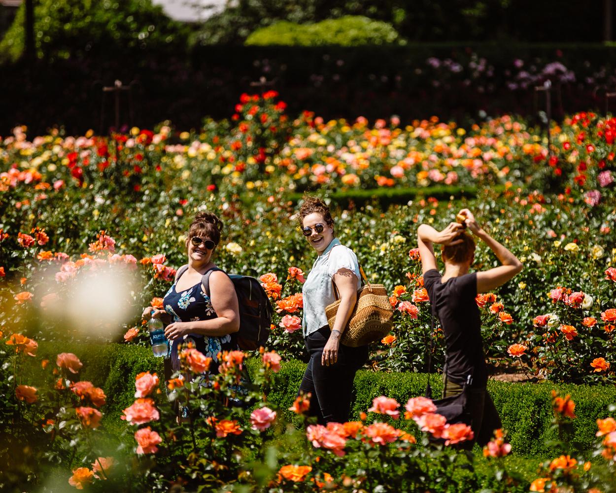 three women walk through rows of roses