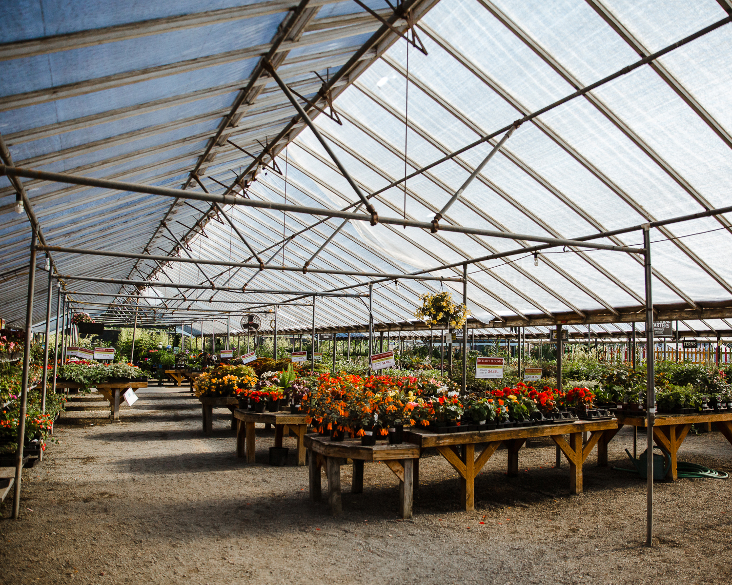 rows of potted flowers on tables in a greenhouse
