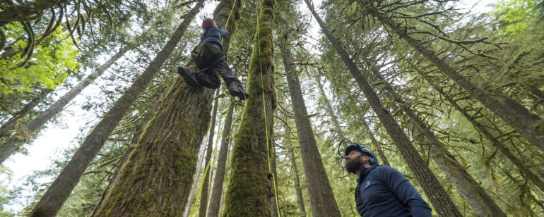 Expedition Old Growth leads tree-climbing tours in Mt. Hood National Forest.